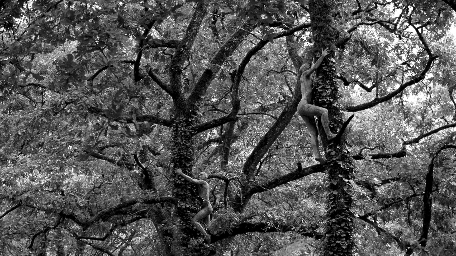 Les arborigènes, par Ernest Pignon-Ernest